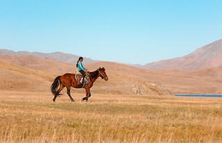 Partout, de jeunes cavaliers rentrent le bétail