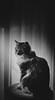 mimi (andrew_hm93) Tags: animal gata gato cat neko portrait kitty 35mm nikon d5300 pet bw blackandwhite gatto gatos cats meow kedi felino