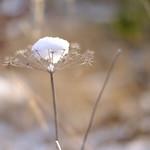Winterimpressionen II thumbnail