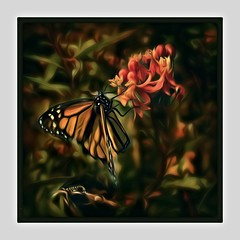 Monarch and Caterpillar (Christina's World-) Tags: nature california caterpillar butterfly monarch garden creative colorful painterly digitalpainting digitalart artistic border flowers milkweed plants square impressionism green red orange coth5