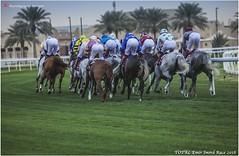 IMG_7027 copy (Services 33159455) Tags: qatar doha horse racing qrec emir horseracing raytohgraphy