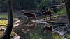 Prins Alfredhert | Diergaarde Blijdorp Rotterdam (Marjan van de Pol) Tags: 5dmarkiv blijdorp canon canon5d nederland rotterdam fave favorite faved zoo