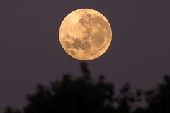 Sunrise Supermoon '16 (JimmyBleu) Tags: fullmoon moon pentax pda55300f458 promasteraf17tc pentaxk5iis k5iis sunrise