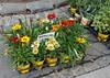 Flower Market! (christine zenino) Tags: ljubljana slovenia market cute explore yellow happy