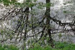 Reflectie / Reflection (wilma HW61) Tags: reflectie reflection réflexion reflexion spiegeling boom tree gras grass water wasser nederland niederlande nikond90 natuur nature netherlands naturaleza natur holland holanda paysbas paesibassi paísesbajos europa europe outdoor wilmahw61 wilmawesterhoud