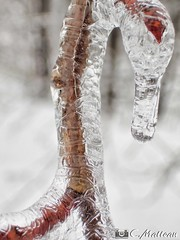 180221-13 L'ère de glace (clamato39) Tags: verglas branche branch glace ice hiver winter provincedequébec québec canada neige snow macro