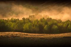 Forest in the mist (ajecaldwell11) Tags: trees xe3 hawkesbay sunrise tukituki ankh clouds dawn mist fog sunlight newzealand caldwell fujifilm light