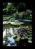 Duke Gardens July 2015 9.28.48 PM (LaPajamas) Tags: nc flora dukegardens gardens