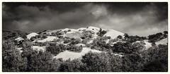 Sunol Golden Ridge No. 2  B&W (Charlie Day DaytimeStudios) Tags: afterastrom ca california clouds cloudy eastbay eastbayregionalparks fallcolors hillside sanfranciscobayarea sunolca sunolpark sunolregionalpark trees