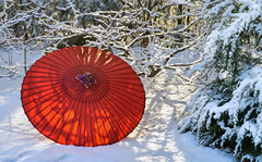 Red umbrella (Tim Ravenscroft) Tags: umbrella red japanese snow hasselblad hasselbladx1d x1d winter