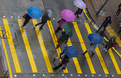 hk streets (Greg Rohan) Tags: rainyday wetday streetlife lines yellow umbrella umbrellas people rain wet street asia hongkong china hk crossing d7200 2017 nikkor nikon