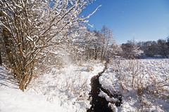 Am Hopfenbach (Lilongwe2007) Tags: ahrensburg schleswig holstein hopfenbach deutschland tunneltal natur landschaft schnee eis winter kälte wasser bach fluss