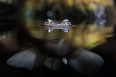 Vierauge (muman71) Tags: dscf0827 wilhelma zoo stuttgart fuji xt2 aquarium 2018 flickrtreffen2018jan14 iso3200 1125sec f64 60mm fujinon18135 makrokonverter