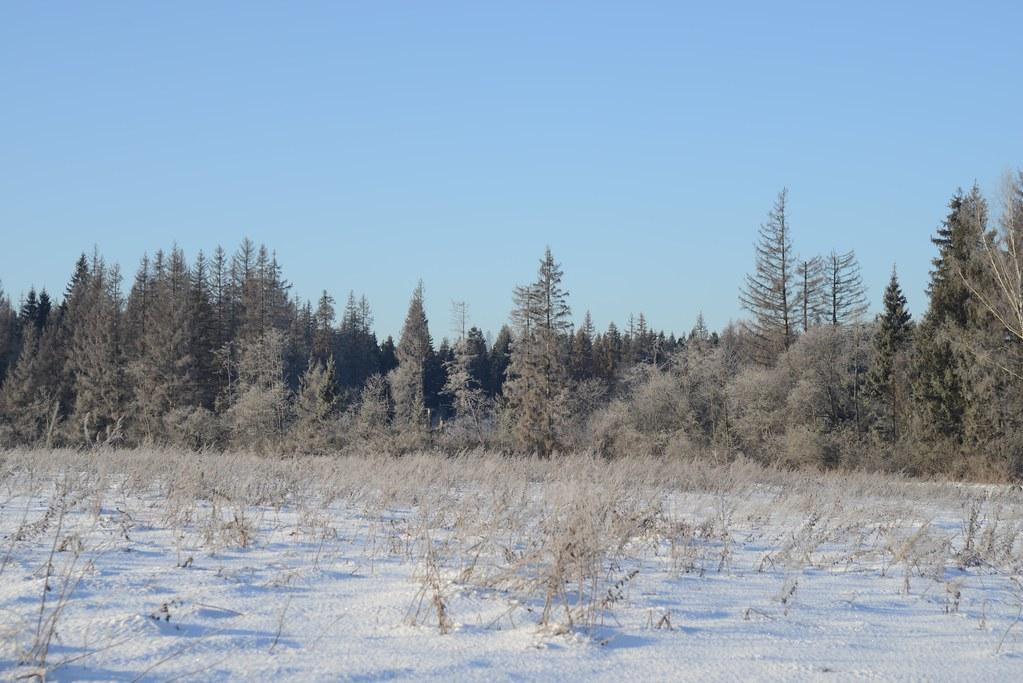 фото: Зимнее