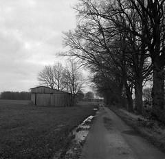 Dismally day (Rosenthal Photography) Tags: felder ff120 weltaweltax landschaft ilforddelta3200 6x6 asa3200 schwarzweiss anderlingen rodinal12520°c13min 20180102 strase mittelformat scheune städte feldscheune bw weg feldweg analog bnw dörfer siedlungen welta mood winter january zeiss 75mm f35 ilford delta delta3200 rodinal 125 wpson v800 blackandwhite mediumformat landscape trees nature road path pathway way track trail barn fields