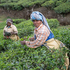 tea pickers (Wanda Amos@Old Bar) Tags: india picker tea teaplantation worker