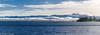200 bufflehead (robinnestridge) Tags: oympicmountains colwood esquimaltlagoon