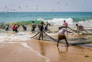 Traditional Net Fishing