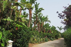 alley in green :) (green_lover) Tags: alley path trees siampark tenerife canaryislands spain plants vegetation flora green vanishingpoint