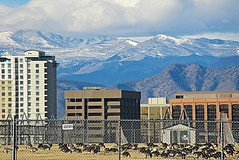 Mountains and geese 2 (DannyAbe) Tags: denver rockymountains rockies frontrange landscape geese