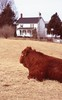 Cow on a cloudy day (matthew.vortex) Tags: aristarapide6 homeprocess slides e6 velvia100 fuji ais nikkor10525 fe2 nikon kentucky georgetown americana rural farmhouse farm cow