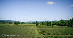 (Jonan G.E) Tags: jonanesguerra canon40d canon napavalley napacounty california usa winecountry wine grapes vineyard nature andscape green beauty serene relaxing opus1winery winery