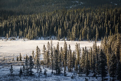 (Marie-Laure Even) Tags: 2017 alberta amériquedunord arbre canada december décembre fjall forest forêt hiver kananaskiscountry landscape marielaureeven montagne mountain nature neige nikond70 northamerica paysage peterlougheedprovincialpark roadtrip snow soleil sun travel tree voyage wild wilderness winter wood гора природа elkford
