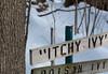 I touched, I itched, poison Ivy (Joe_Petykowski_Jr) Tags: posion itch scratch rash winter poisonivy stillmannaturecenter 2018 stillman