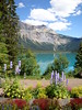 A Lake In The Mountains (ericgrhs) Tags: rockymountains canada kanada mountain lake flowers blumen tree see nature landscape natur landschaft sommer summer bergsee
