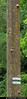 20170628_07 Three little Helix pomatia snails on concrete pillar | Białowieża Forest, Poland (ratexla) Tags: ratexlasinterrailtrip2017 28jun2017 2017 canonpowershotsx50hs interrail interrailing eurail eurailing tågluff tågluffa tågluffning travel travelling traveling journey epic europe earth tellus photophotospicturepicturesimageimagesfotofotonbildbilder wanderlust vacation holiday semester trip backpacking tågresatågresor resaresor europaeuropean sommar summer ontheroad beautiful poland polska białowieżaforest bialowiezaforest białowieża bialowieza nature animals nonhumananimals snail snails shell shells invertebrate invertebrates evertebrat evertebrater animal nonhumananimal cute cool life organism snigel sniglar snäcka snäckor biology zoology wildlife vilda djur mollusc molluscs blötdjur ryggradslösadjur helixpomatia vinbergssnäcka burgundysnail escargot
