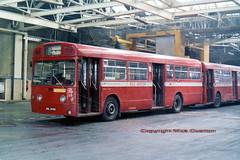 1969 AEC Merlin MBA560 AML560H & MBA534 VLW534G as withdrawn for scrap March 1981 (sms88aec) Tags: 1969 aec merlin mba560 aml560h mba534 vlw534g withdrawn for scrap march 1981