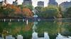 Central Park | New York | USA (Ben Molloy Photography) Tags: benmolloy ben molloy photography travel nikon d800 nyc newyork usa timessquare centralpark