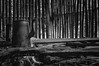 180120_Reserva-Indigena-Rio-Silveira_044 (Luiz Henrique Foto) Tags: luizhenriquefoto luizhenriquephoto aldeia aldeiaguarani aldeiaguaraniriosilveira aldeiaindígena allrightsreserved autoral beach bertioga bertiogasp bonfire bule culturaindígena desenhandoaluz eco ecologia estadodesãopaulo fire fogo fogueira fotografiaautoral fotografiadeviagem horizontal householdappliance indianreservation indigenousvillage indigenousvillageguaraniriosilveira indigenousculture litoral litoralnortedesãopaulo luizhenriquefotografia naturephotography natureza outputphoto playa praia praiadeboracéia reservaindígenariosilveira reservaindígena riosilveiraindigenousreserve sp saídafotográfica sãopaulo teapot todososdireitosreservados travelphotography utensíliodoméstico coast sand shore strand waterside wwwluizhenriquefotocombr ©luizhenriquerocharodrigues índio índioguarani brasil fotografiadenatureza