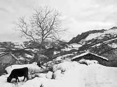 Taranes, Asturias (Luisa Colado) Tags: taranes asturias nieve blancoynegro naturaleza paisaje landscape nature snow blackandwhite