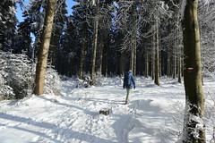IMG_0228 (rudolf.brinkmoeller) Tags: eifel wandern natur eifelsteig hohesvenn