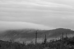 Tum024_small (patcaribou) Tags: tucson tumamochill sonorandesert fog cactii saguarocactus