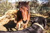 Meeting between animals (eskstreetph) Tags: animal horse dog nature homesweethome tuscany italy domesticpartnership amazing friends postcard garden winter cold canon eos550d looks pony hay photoshopcc animale