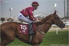 IMG_7120 copy (Services 33159455) Tags: qatar doha horse racing qrec emir horseracing raytohgraphy