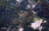 Sea grass, rock weed off Portsea, Sorrento 1989 (Mary Gillham Archive Project) Tags: 11318 1989 australia morningtonpeninsula planttree portsea rockweed sand seagrass sorrento victoria