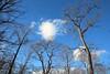 Bare trees (Teruhide Tomori) Tags: baretrees winter forest nature landscape hokkaido japan japon lakeshikotsu chitose sky tree 北海道 森 冬 枝 自然 風景 日本 支笏湖 千歳