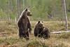 Bears (86jiangwei) Tags: abruzzo beautyinnature gransasso italy mountainrange summer nature outdoors trekking