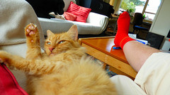 Bliss is . . . (Sandy Austin) Tags: panasoniclumixdmcfz70 sandyaustin massey westauckland auckland northisland newzealand cat indoor animal mario