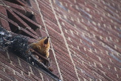 225/365/3512 (January 22, 2018) - Harlan the Squirrel at the Hatcher Graduate Library at the University of Michigan (January 22nd, 2018) (cseeman) Tags: gobluesquirrels squirrels annarbor michigan animal campus universityofmichigan umsquirrels01222018 winter eating peanut januaryumsquirrel umsquirrel snowsquirrels snow snowy harlanhatchergraduatelibrary hatchergraduatelibrary harlanthesquirrel libraries harlansquirrel brick brickwall umharlan01222018 2018project365coreys yeartenproject365coreys project365 p365cs012018 356project2018