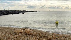 Petxines (Xavier Larrosa) Tags: concha barcelona poblenou beach landscape sky sand shell