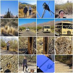 Sabino Canyon Nature Walk 2018-01-31 (Chic Bee) Tags: fdsflickrtoys nedharris sabinocanyon sabinocanyonvolunteernaturalists guides naturewalk 20180131 tucson arizona southwesternusa americansouthwest america nature walking