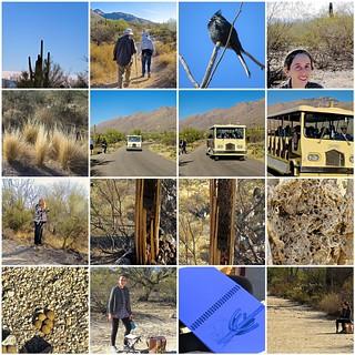 Sabino Canyon Nature Walk 2018-01-31