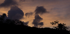 Trinidad (richard.mcmanus.) Tags: trinidad rainforest dawn landscape clouds mcmanus panorama