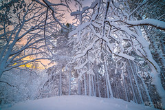 Magic morning (MarioCibulka) Tags: nature winter forest snow landscape cold magic season ice white beautiful tree frost light outdoor fairytale wood snowy scene seasonal beauty adventure hill nobody colorful peaceful sunrise hiking