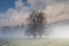 Hugging trees (ola_er) Tags: tree trees landscape fog mist scotland hills sky grass forest field glen perthshire