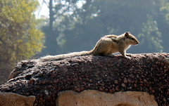 furry guest at qutab minar (kexi) Tags: delhi india asia qutubminar animal furry squirrel nature canon february 2017 instantfave